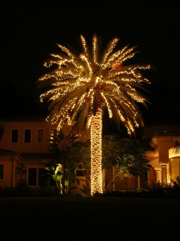 Attractive Palm Trees With Christmas Lights Pictures Part - 13: Charleston Lighted Palm Tree · Holiday LightsChristmas ...