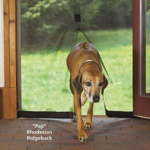 Instant Screen Door - Dog Beds, Dog Harnesses and Collars, Dog Clothes and Gifts for Dog Lovers | In The Company Of Dogs
