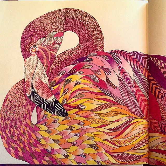 find this pin and more on coloring millie birds