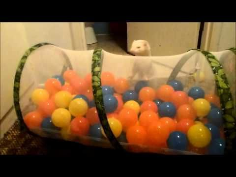 The ferrets' new ballpit from Santa - YouTube