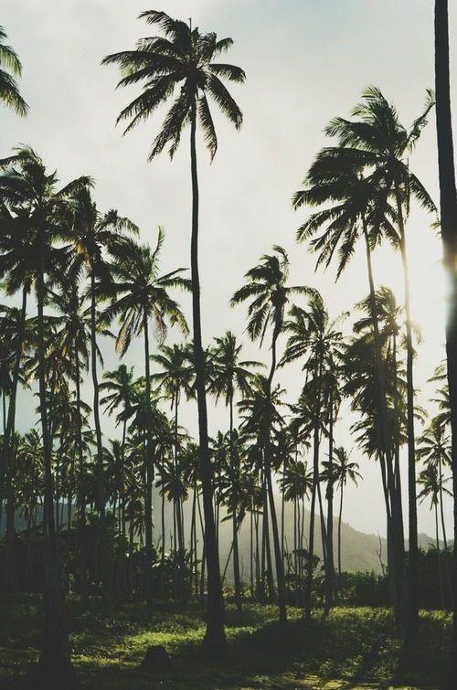 Feelin' palmy