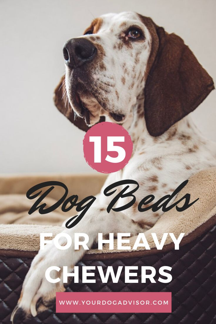 The Best Dog Beds For Heavy Chewers Cool dog beds, Dog