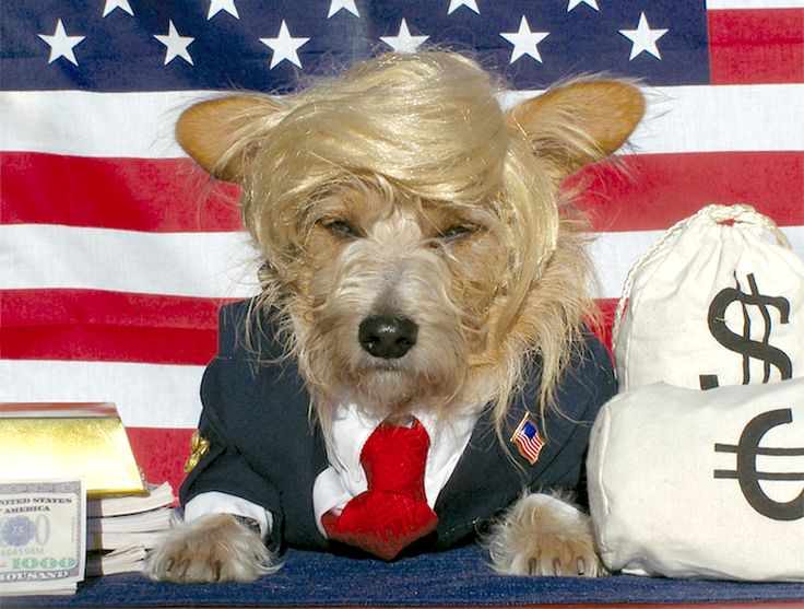 make america great again and get all the laughs by turning your pup into donald trump on halloween with this diy dog costume idea - How To Make A Dog Halloween Costume