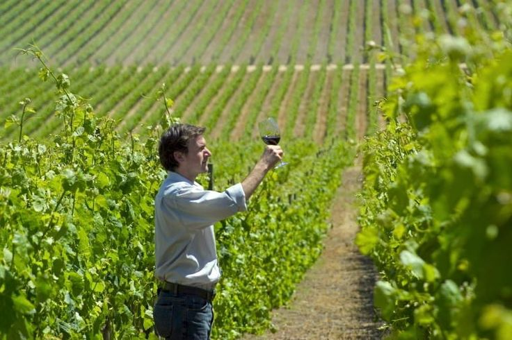Chile Ruta del Vino de Curicó