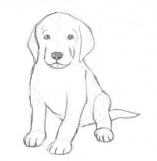 Красивые рисунки собак легкие