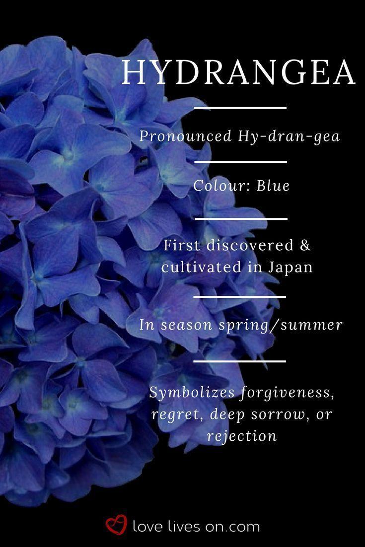 Blue Hydrangea Meaning Blue Hydrangeas Symbolize Forgiveness Regret Deep Sorr Blue Deep Forgiveness In 2020 Funeral Flowers Flower Meanings Flower Garden Plans