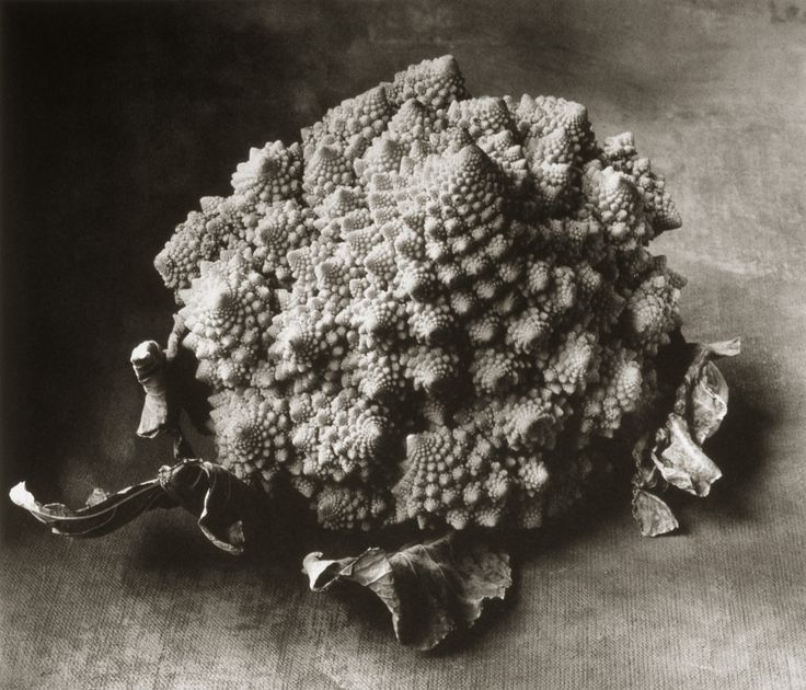 Italian Cauliflower ©Cy DeCosse Fine Art Photography. The Beauty of Food Collection. Limited edition platinum-palladium print. CyDeCosse.com #photography #art #food