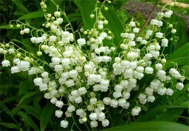 Image Gallery may birthday flower