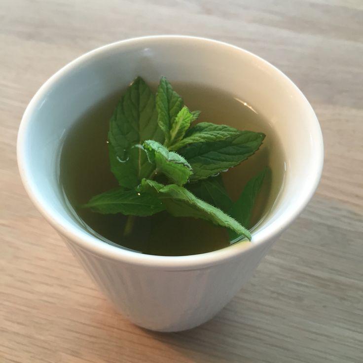 Te med frisk mynte, ingefær og lidt honning.