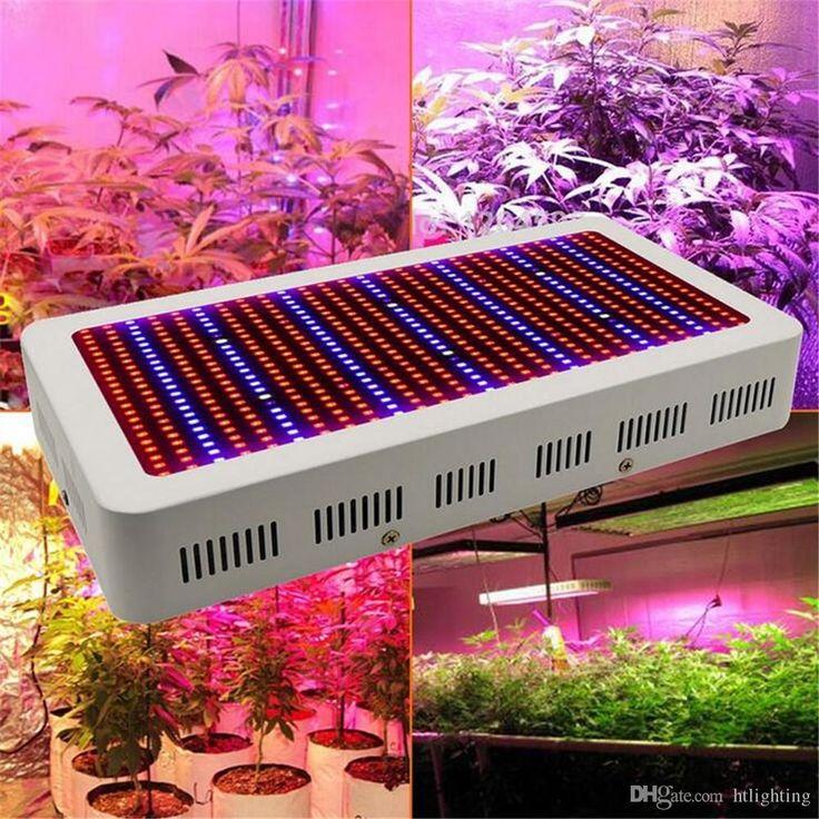 Best Led Grow Lights For Vegetables