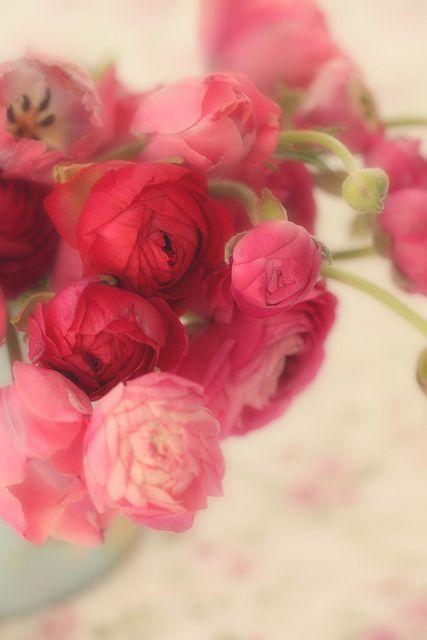 Ranunculus - my favourite flower x