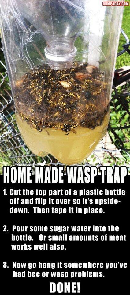 Bee trap  Bovenstuk van een fles afknippen en omgekeerd in de fles steken. Suikerwater erin doen. En ophangen. En wachten tot ze in de val komen.