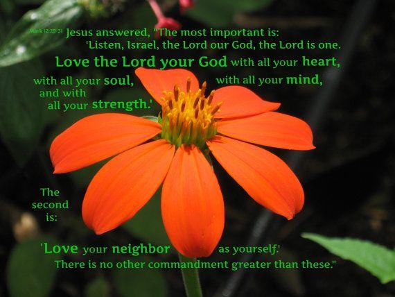 Greatest Commandment Scripture Art Orange Flower photo by PraiseAndPromises