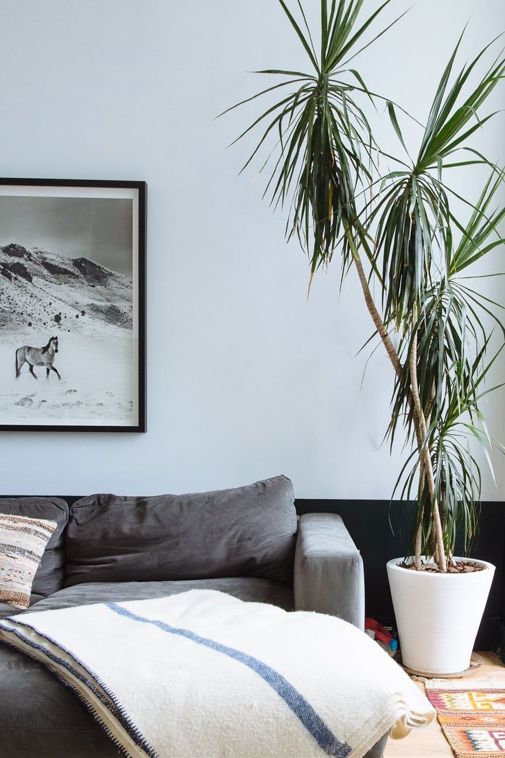 Plant Goals: Dracaena: The Tall, Chic, Air-Cleaning Tropical Plant (That's Actually Easy to Grow)