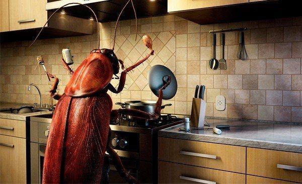 Как бороться с бытовыми насекомыми 1. Мухи. Комнатные мухи не выносят запаха пижмы: если в комнате будет это растение, мухи улетят. 2. Меньше мух будет залетать в окно, если смазать рамы уксусом. 3. Мухи не выносят запаха воска, скипидара, касторового масла, а больше всего — керосина. 4. Когда моете окна и полы, добавляйте в воду немного керосина. Летом затяните окна марлей в два слоя или повесьте на форточку нарезанную полосками бумагу. 5. Старый и испытанный способ для уничтожения мух —…