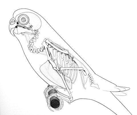 Itsvondell Sometimes Birds Lie About Their Necks