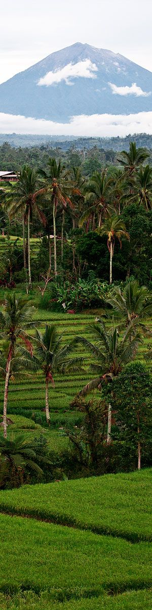 Bali rice terrace view with volcano