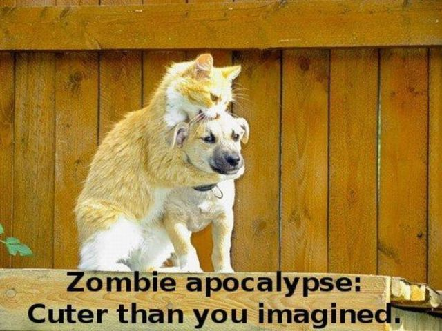 In this case, we would have to agree.  #cat #meme #zombies