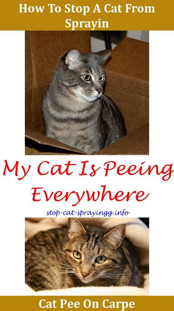 Kitty No Spray Cat Spray Smell Removal Old Cat Urine Odor Removal Cat Pee Odor Best Carpet Shampoo For Cat Urine,weird cat behavior.Cat Urine Out O… ...