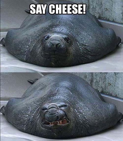 Say cheese! | 21 Photos Guaranteed To Make You Laugh Every Time