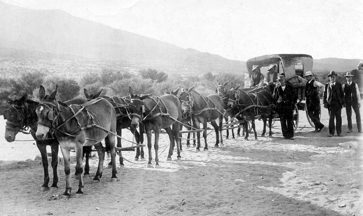 Through Namaqualand (1906). 604 miles by mule wagon, 20th February to 12th March 1906. A.Grant Dalton. M.I.C.E.  G C S Clark. C.M.G.  H M Beatty. C.M.G.  Geo. Terry. Secretary.   Courtesy: Hilton T., St. Albans (United Kingdom).