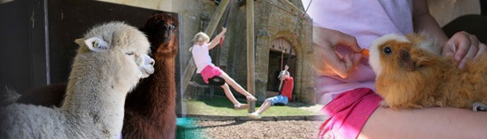 Abbotsbury Children's Farm - the kids used to LOVE it