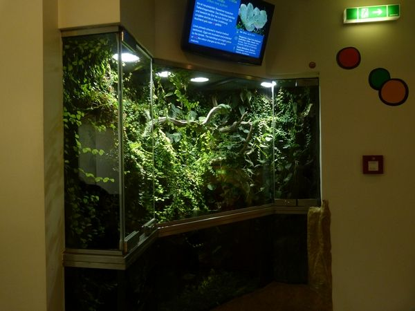 207 Best Vivarium Aquarium Amp Terrariums Images On