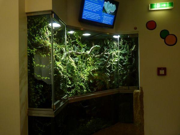 Green tree python enclosure