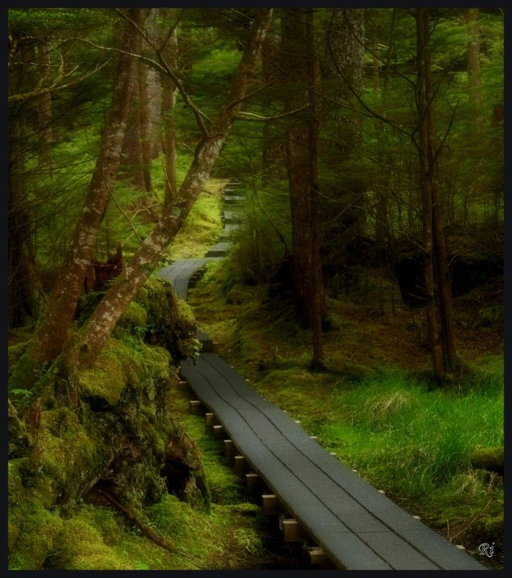 18 Best Images About Haida Gwaii On Pinterest Canada
