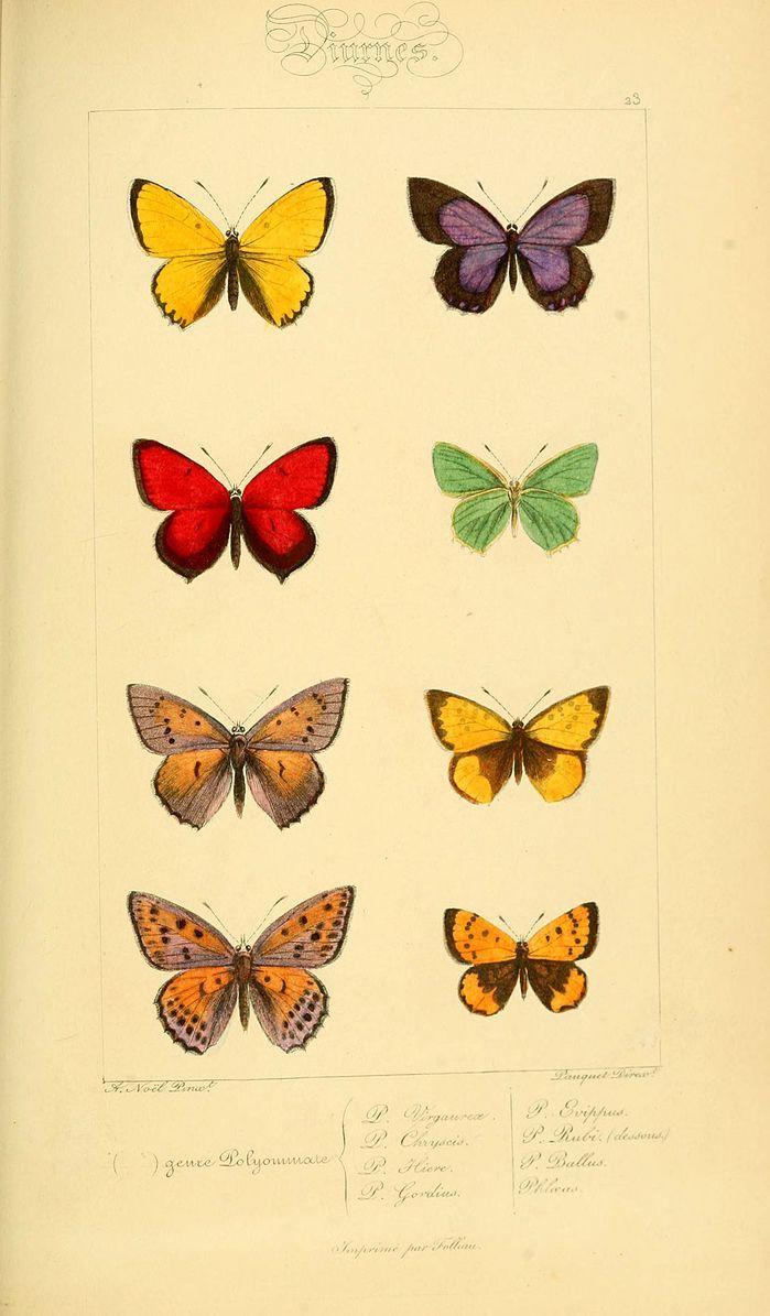 File:Histoire naturelle des lépidoptères d'Europe (Plate 23) (6053831636).jpg