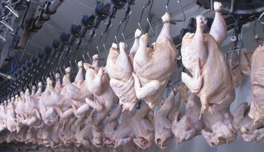 Lavoratori in batteria come i polli. Indagine di Oxfam sulle condizione di lavoro nelle grandi aziende avicole statunitensi