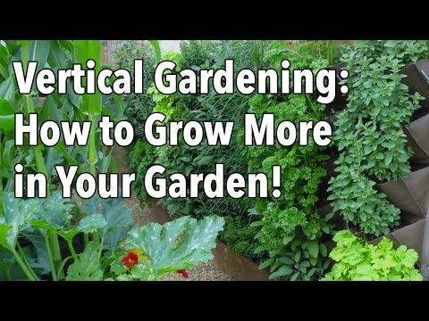 Beautiful examples of vertical vegetable Gardening - YouTube