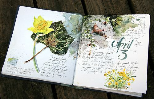 Illustrated journal. The littlest details can become incredibly interesting if only someone notices them