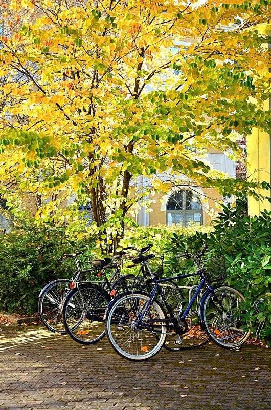 Autumn in Karlstad Sweden