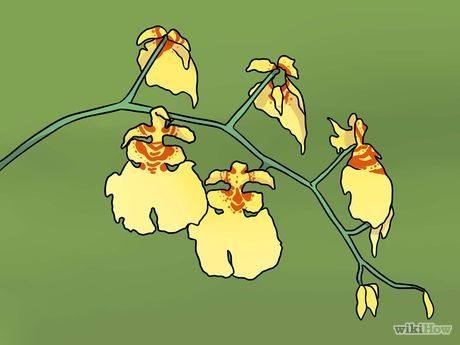 Imagem intitulada Prune Orchids Step 1