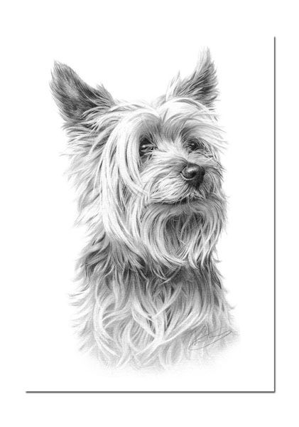Pin by Mary Becker on yorksire terrier | Dog print, Dog ...