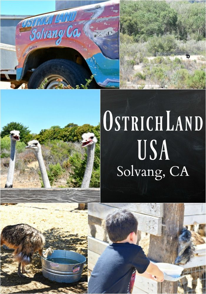 OstrichLand USA in Solvang, Central California - http://livingmividaloca.com/ostrichland-usa-solvang-california/