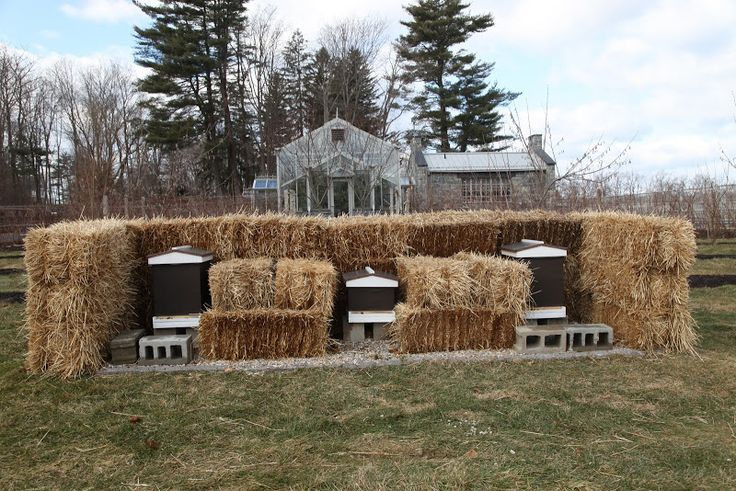 Bee Hive Journal- protecting hives in winter