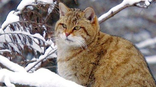 Wildkatzen | Einsfestival