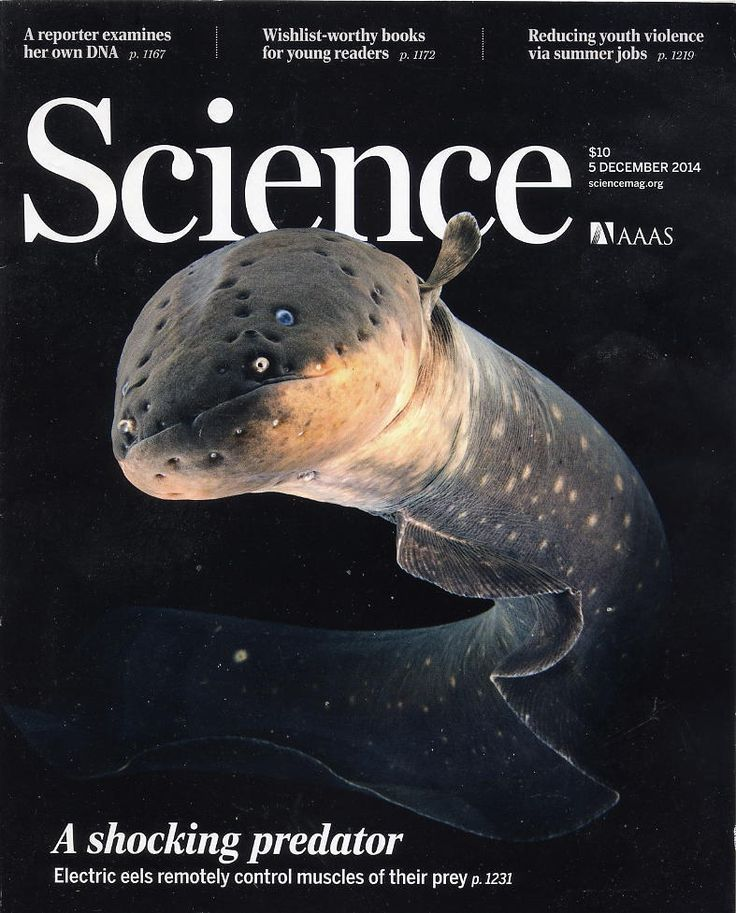 daily southt science magazine - 736×913