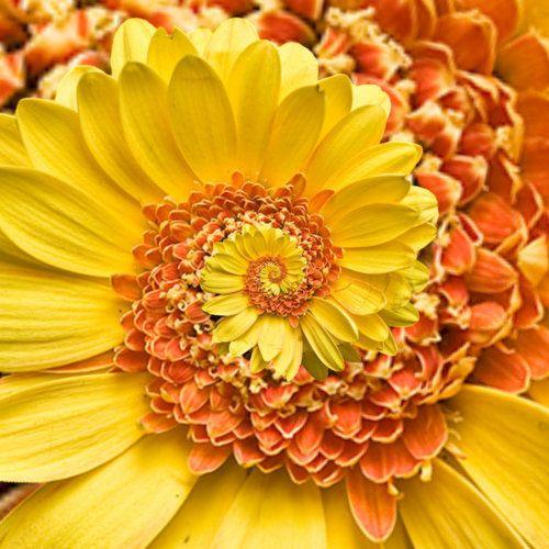 fibonacci sequence in nature....love!