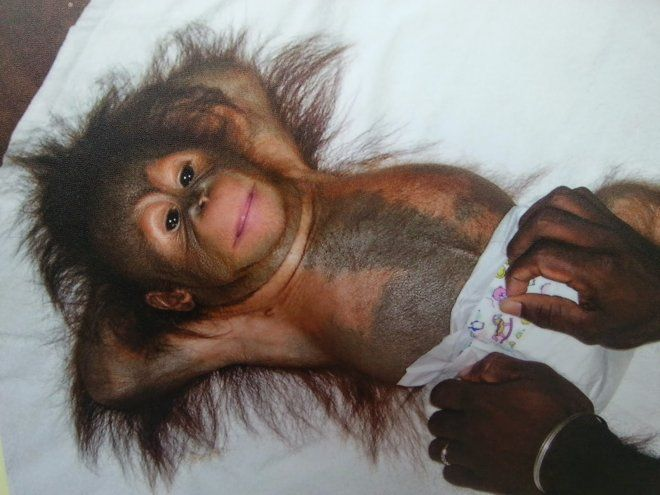Baby Gorilla In Diaper Cartoon