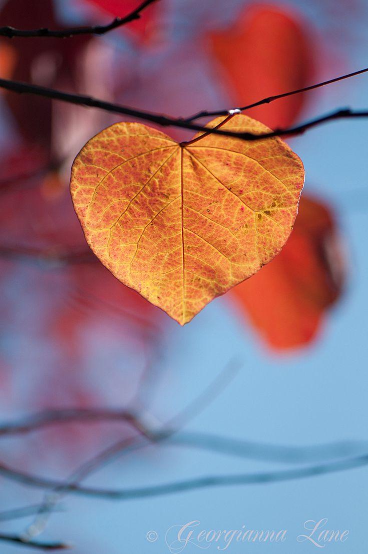 Georgianna Lane: Autumn ♥ Love