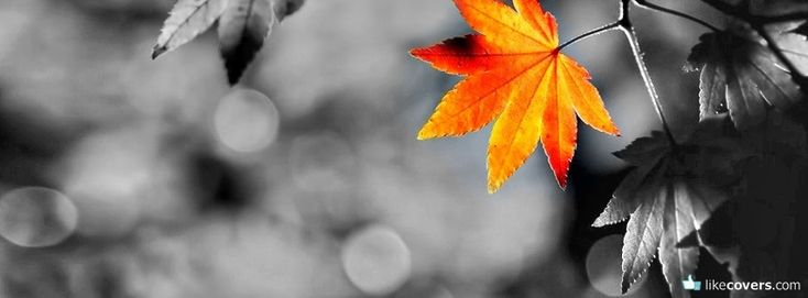 orange-leaf-black-and-white-photo-facebook-covers.jpg 851×314 pixels