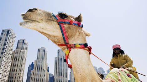 Middle East Travel Information and Travel Guide - Lonely Planet