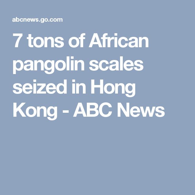7 tons of African pangolin scales seized in Hong Kong - ABC News
