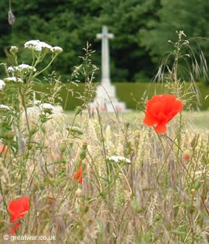 Poppies growing near Connaught British Military cemetery on the old Somme battlefield.