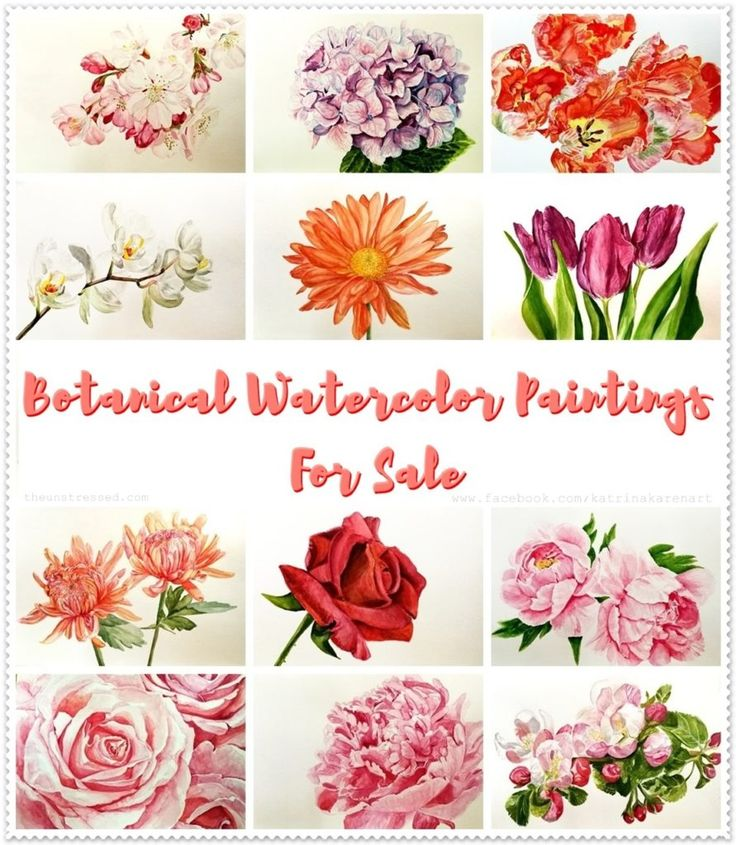 Original Watercolor Paintings for Sale and How to Display Them
