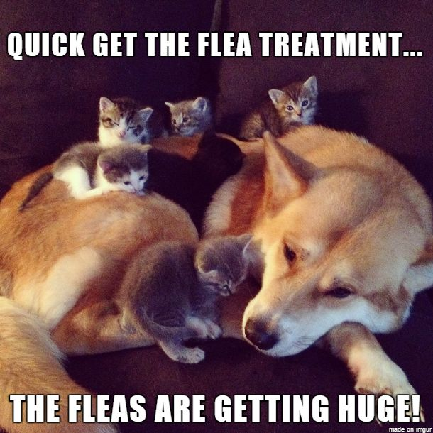 See all 6 #kittens?Kill fleas with the lasting results of Bayer products & save 15% off!