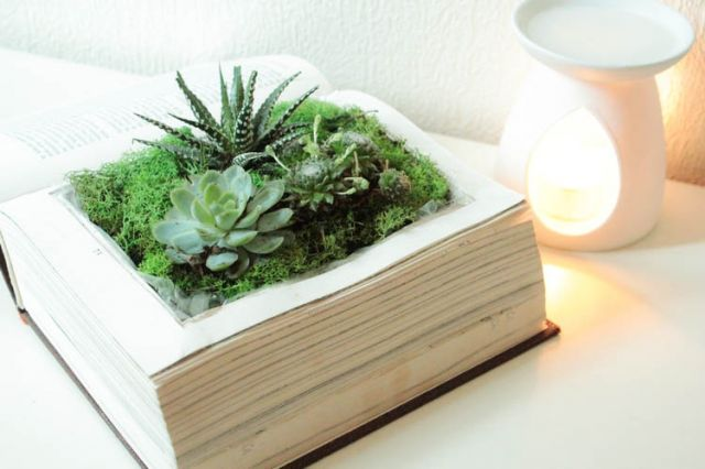 Terrarium dans un vieux livre http://www.maisons-qualite.fr/2014/04/diy-planter-des-livres.html